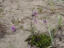 Цветущий песок