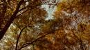 (Бывший сквер на центральной площади. г.Находка)Краски осени
