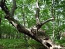 Бухта Муравьиная, в лесу.