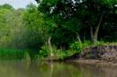 Река по дороге на озеро Ханка