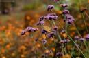 Бабочка. Ботанический сад, Владивосток