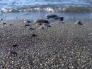 Черный песок острова Рикорда
