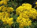 цветы острова Рикорда