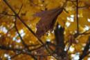 Золотая осень. Карабельная набережная