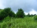 Хасанский р-н ооони такие сочные и зеленые