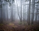 Утренний туман.  Гора Туманная. Партизанский р-н.