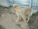 Собачки обожают дышать свежим, морским воздухом Приморского края
