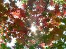 Солнца луч