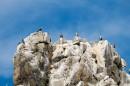 Полуостров Гамова, мыс Скалистый. Бакланы на скалах