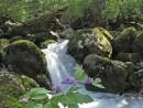 Водопад. На переднем плане - цветущий аконит.