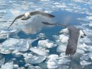Лёд, небо,чайки.  П.Славянка.