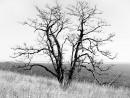 Одинокое дерево.  Неподалёку от Сидими.