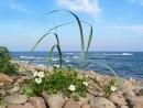 И на камнях растут цветы.