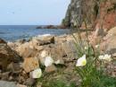 Белые маки на острове Шкота.  О.Шкота.