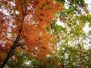 Тот год, красочная осень. Лес г.Артема