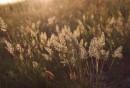 Закатный свет в траве 26-й батареи