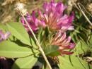 Местные растения