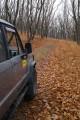 Моя машинка на лесной дороге