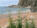 Оранжевый песок острова Желтухина