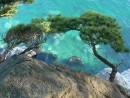 Сосны над изумрудной водой.   Бухта Алексеева, Полуостров Гамова.