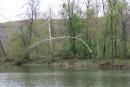 Река красивая, а рыбы мало