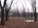 Из-за соседствующих с этим лесом людей, он стал очень редким...