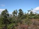 Пидан окружает суровая растительность