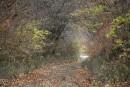 Лесной коридор
