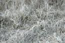 Космическая трава