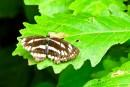 Какая-то бабочка 3