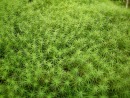 больше зелени