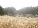 Трава во круг озера