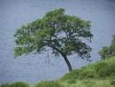 Одинокое дерево на берегу
