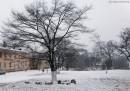 г.Артем, после снегопада.