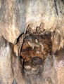 Макрушенская пещера. Ольгинский район.