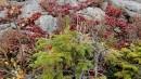 Растения камней. г.Ольховая