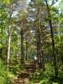 Старые ступеньки, мудрые деревья. Шмаковка