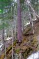 Тайга на пути к водопаду. Склон горы Лысой