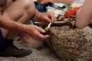 Поедание ежей в бухте Триозерье. Побережье Партизанского и Лазовского районов Приморского края