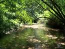 Течёт ручей бежит ручей... В лесу на Среднем