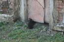 В районе маяка расплодились кролики. Никто их не гоняет, кроме туристов. Маяк Гамова. Полуостров Гамова. Хасанский район.