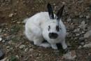 На территории маяка хорошо плодятся кролики. Вероятно атмосфера способствует. Маяк Гамова. Полуостров Гамова. Хасанский район.