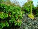Суровая растительность берега Японского моря