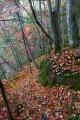 Осенняя тропа к водопаду