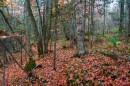 Осенняя тайга