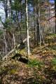 Осеннии тропы