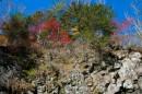 Деревья осенью на склонах