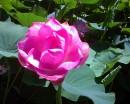 щедрый цветок