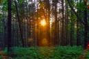 Последние лучики уходящего солнца.   Не успев забраться на вершину сопки Туманной, мы встретили закат сквозь деревья.