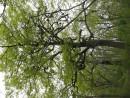 невероятные деревья